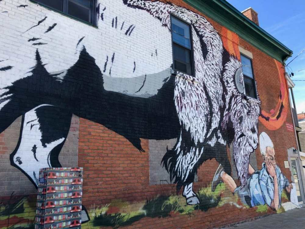 Murale buffle art de rue Ottawa rue Bank quartier Glebe