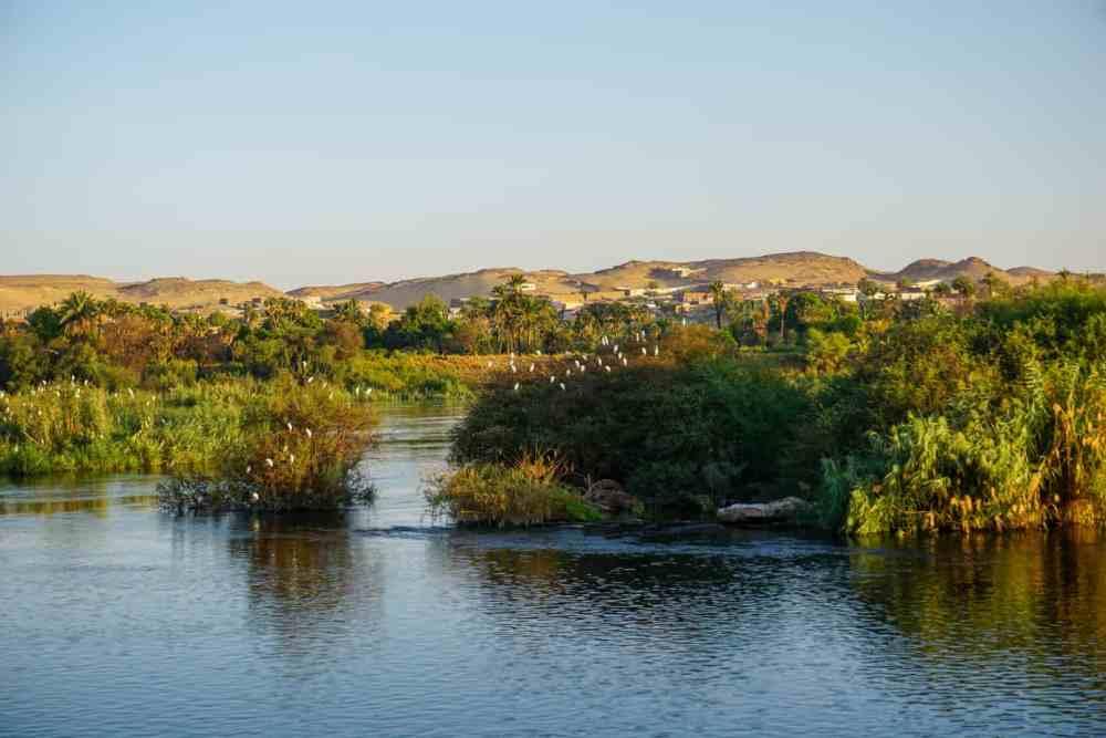 Au lever du soleil sur le Nil, les oiseaux chantent en choeur