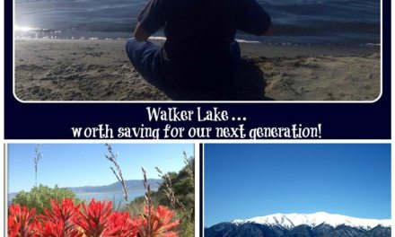 Walker Lake calendar on sale