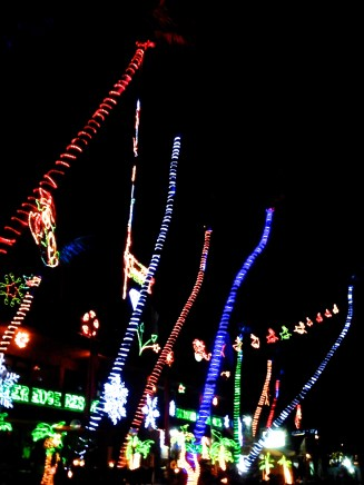 Christmas lights on all the palm trees