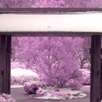 bubble-gum-pink-entrance