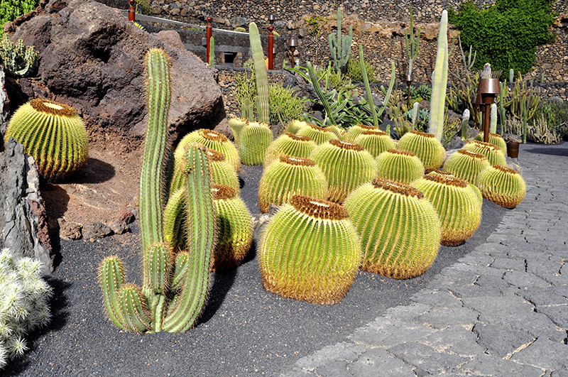 Xeriscaping | Water Conservation in San Diego, CA