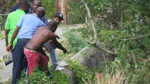 Greater Portmore: Decomposed Body Hanging from Tree Near Gully