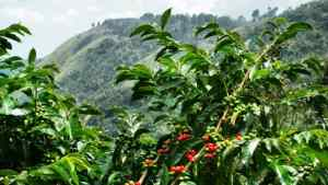 Coffee Farmers Protest