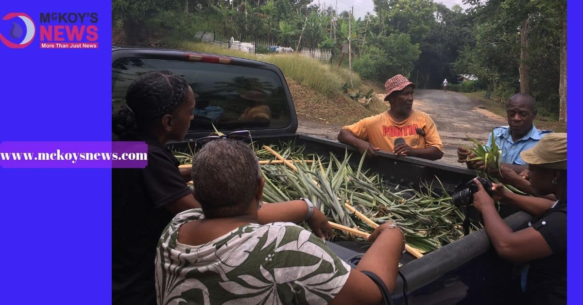 Clarendon Farmers Diversifying Crop Production