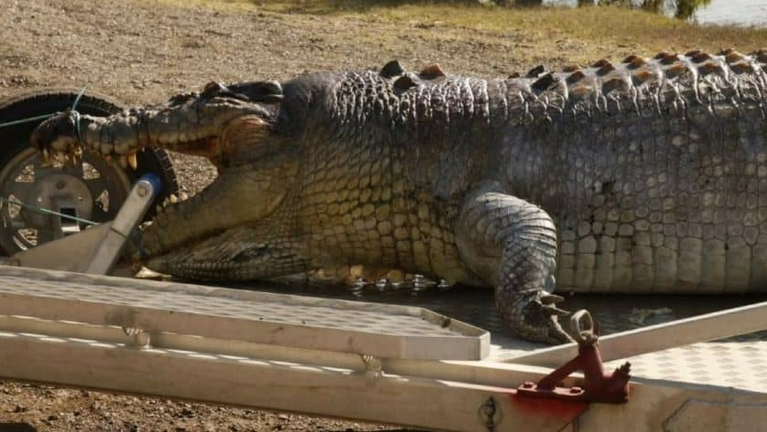100-Year-Old Monster Crocodile Shot Dead