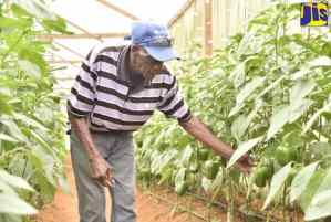 Farmers Benefiting from JBI Greenhouse Project