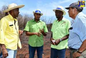 Gov't to Aid Fire-Affected Farmers in St. Elizabeth