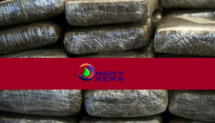 350 Pounds of Ganja Seized in Green Island, Hanover