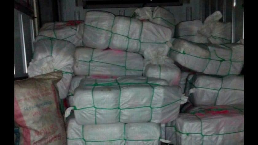 TWO MEN ARRESTED IN MASSIVE GANJA SEIZURE IN CLARENDON