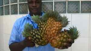 Jamaican Farmer Shows off an Amazing Pineapple