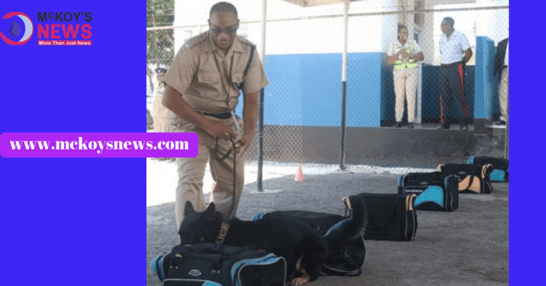 Jamaicans Call for More Police Dogs