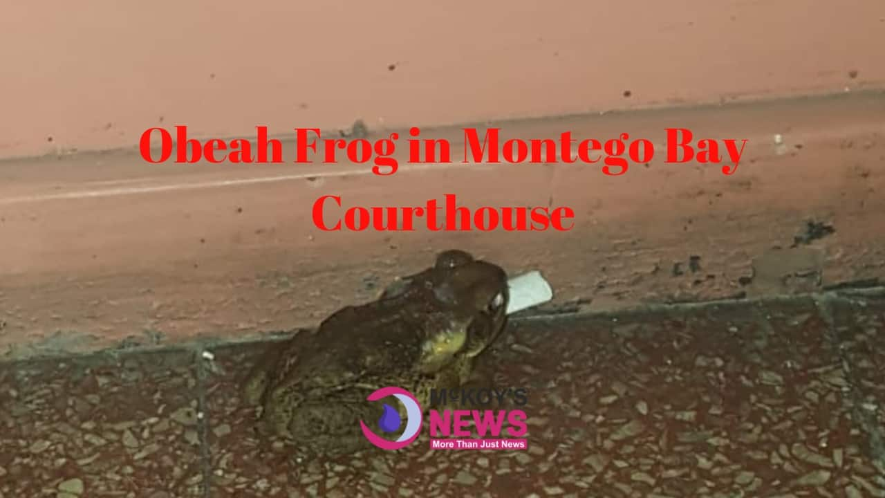 Obeah Frog Invades Mobay Court House
