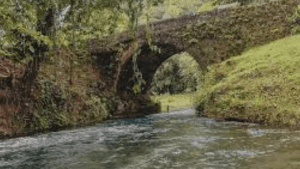 """""""Yardie"""" Drowns in Spanish River, St Mary"""