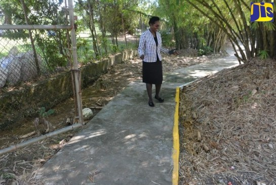 More Protection For Children Along Holland Bamboo Avenue