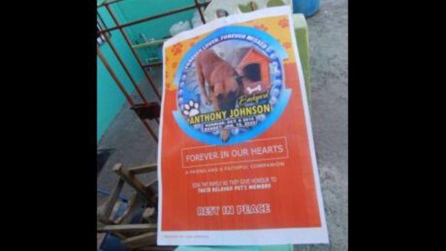 Mongrel dog gets bashment funeral