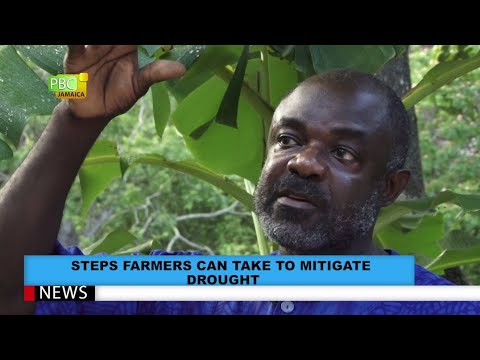 PART 2 Backyard Farming, The Panacea To Food Security In Jamaica