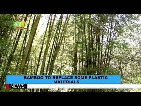 Bamboo To Replace Some Plastic Materials