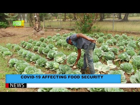COVID-19 Affecting Food Security