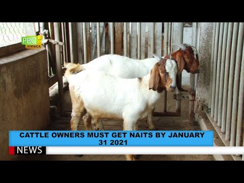 Cattle Owners Must Get NAITS By January 31, 2021