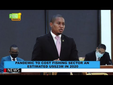 Pandemic To Cost Fishing Sector An Estimated US$23M In 2020