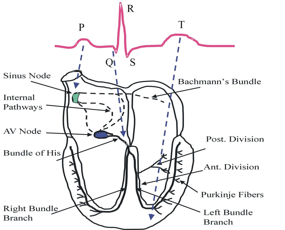 Related Keywords Amp Suggestions For Ecg Mnemonics