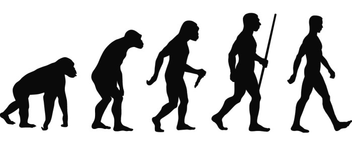 A theory of evolution