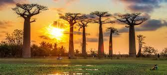 baobab15