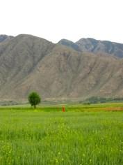144 'Red Woman' - Kyrgyzstan