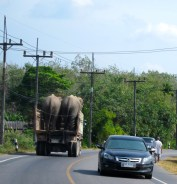Transporting Trunks!