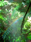 118 'Jungle Rainbow' - Malaysia
