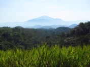 117 'Mountain In The Malay Interior' - Malaysia