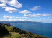 Wellington. City-living but not.