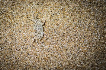 A tiny crab with good camouflage.