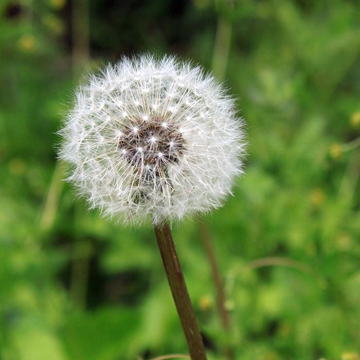 seasonal allergies dental affect