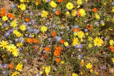 Tutti fiori
