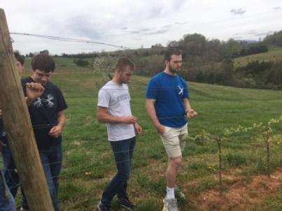 Students Examining Grape Vines
