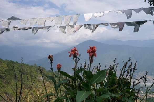 Pictures of prayer flags and canines flowers in Bhutan by Mary Catherine Messner