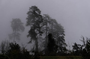 Pictures of Bhutan by Mary Catherine Messner