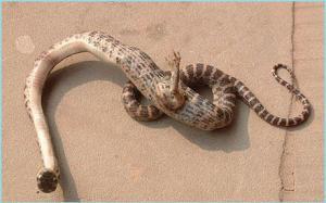 Serpiente con una pata