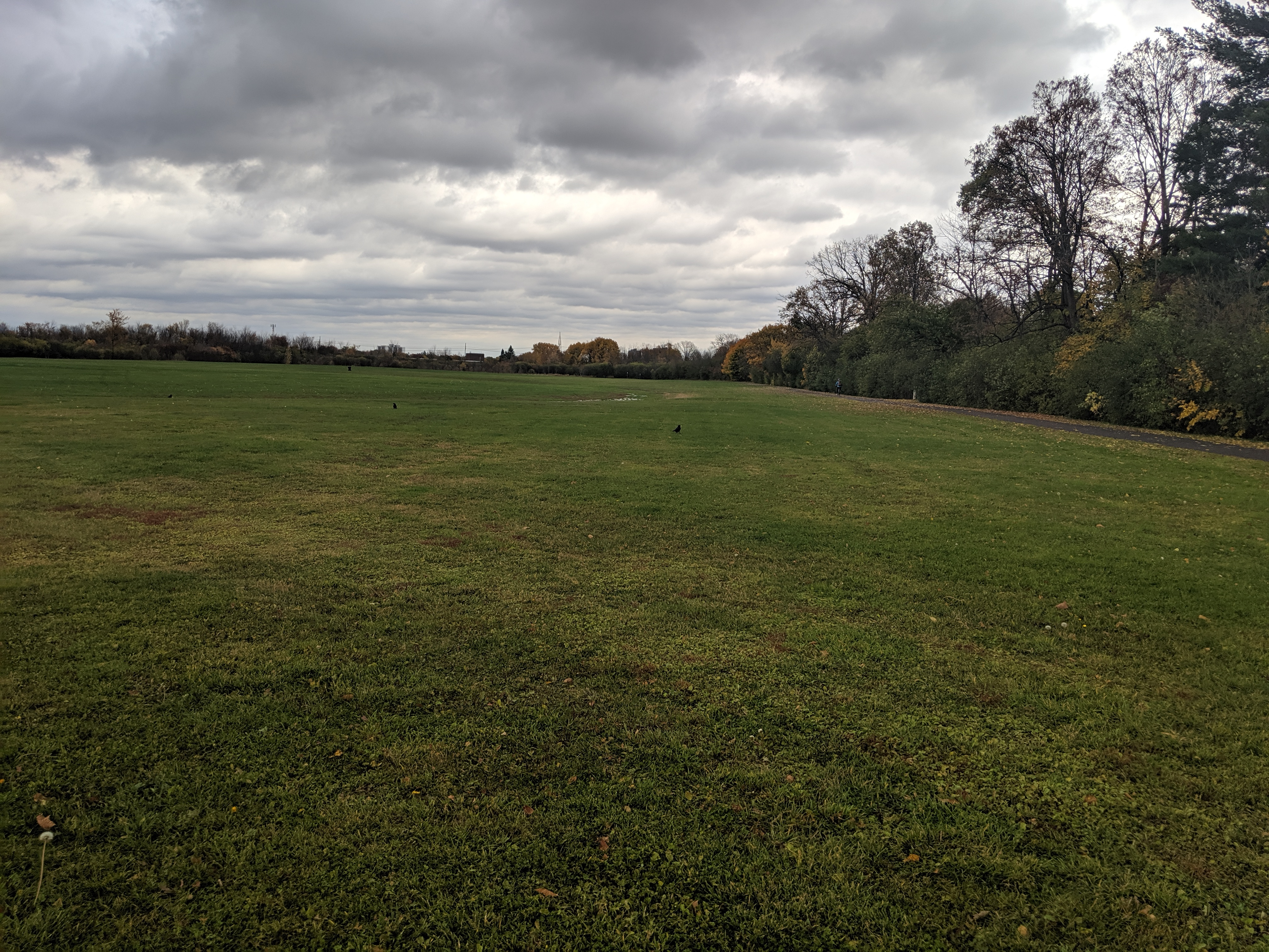 lynda lane park open field
