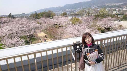 桜の雲海@西宮市越水浄水場から夙川公園へ