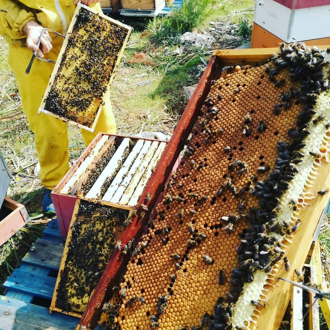 The trays from inside a bee hive