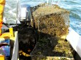 The recovered ghost crab traps of the day begin to pile up.