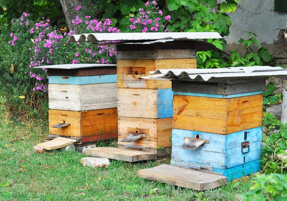 Backyard Beekeeping for Beginners – The Complete Guide!