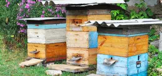Wooden Beehives. Natural Beekeeping in Your Backyard.