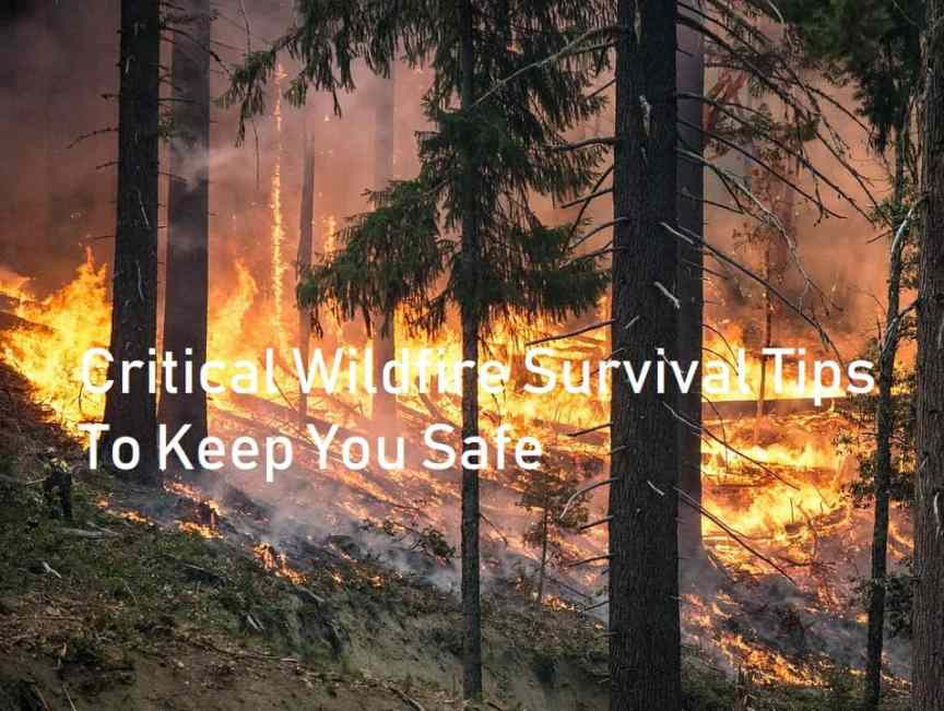 forest-fire-survival-tips