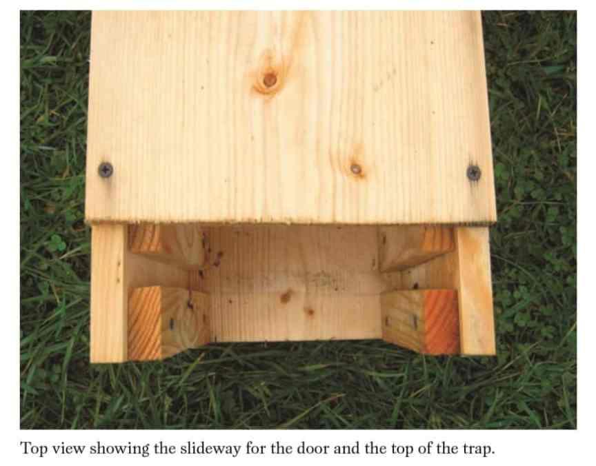 homemade live animal trap