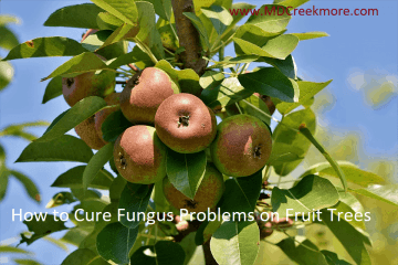 How to Cure Fungus Problems on Fruit Trees