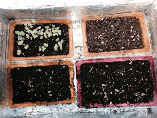 how to make a seed starter